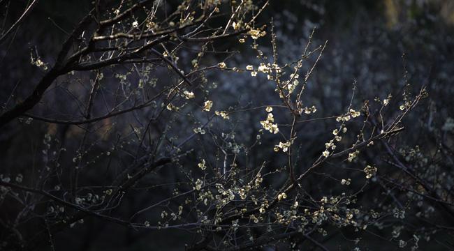 早春の光と影.jpg